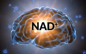NAD+ in the brain